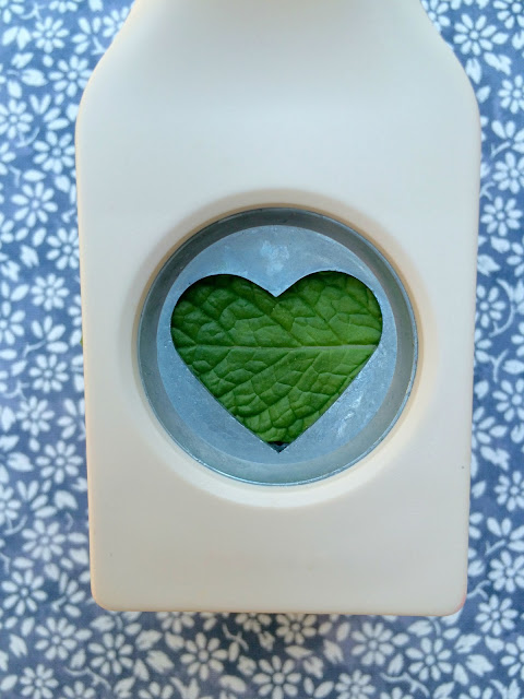 How to make fresh mint hearts - www.jacolynmurphy.com