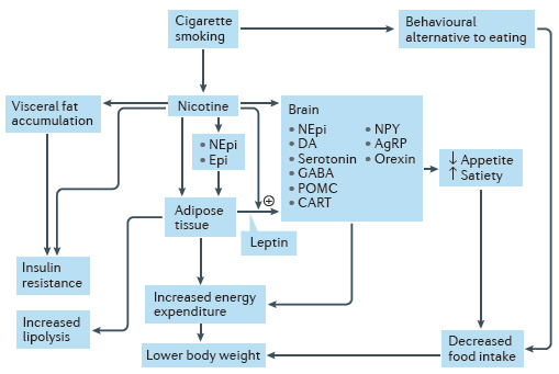 Dejar fumar adelgazar mismo tiempo