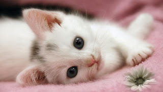 cute cat hd