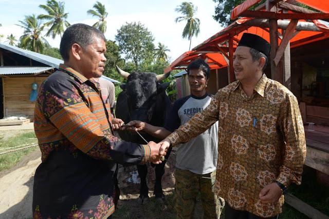Jokowi Sumbang Sapi Kurban Seharga Rp75 Juta untuk Masjid Raya Baiturrahman