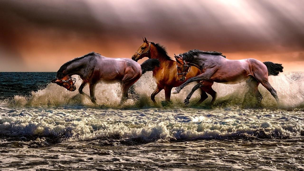 صورة استمتاع الاحصنة باللعب في الماء - اجمل واحلى صور الطبيعة الجميلة والخلابة في العالم
