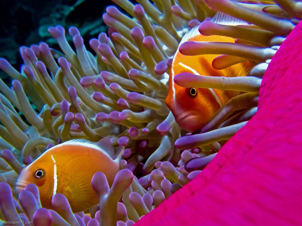 Cars Wallpaper Gif Top 27 Sea Animals Wallpapers In Hd