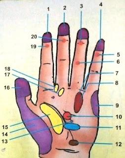 Punggung Tangan Kanan