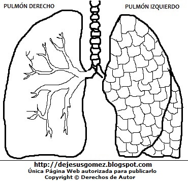 Dibujo de los pulmones para colorear pintar imprimir (para niños y profesores). Dibujo de los pulmones hecho por Jesus Gómez