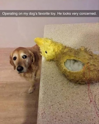 Funny Dog Humor : Whats wrong with my toy?