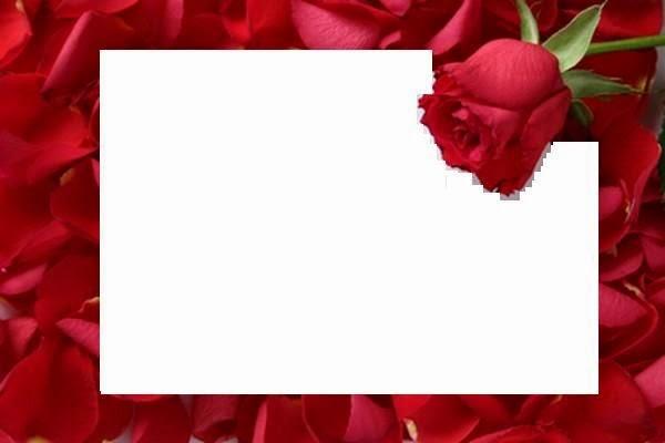 Fondos, Marcos O Invitaciones Con Rosas Para Imprimir