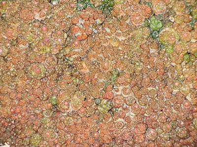 Photo Friday: Cactus Close-Up - April 15, 2011