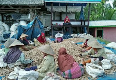 Budidaya pinang (arecanut) mulai dilirik sejumlah petani Indonesia, khususnya Aceh, Jambi, Riau, Sumatera Barat, Jambi, Bengkulu, Riau, Jawa Barat, Jawa Tengah, Jawa Timur, Nusa Tenggara Barat, Kalimantan Barat, Kalimantan Selatan, Papua dan petani Irian Jaya Barat.