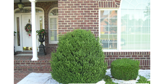 Shrub Trimming Keedysville MD Washington County Maryland