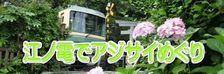 江ノ電でアジサイ