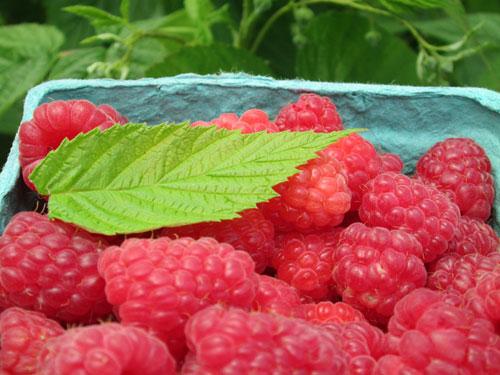 organic raspberries