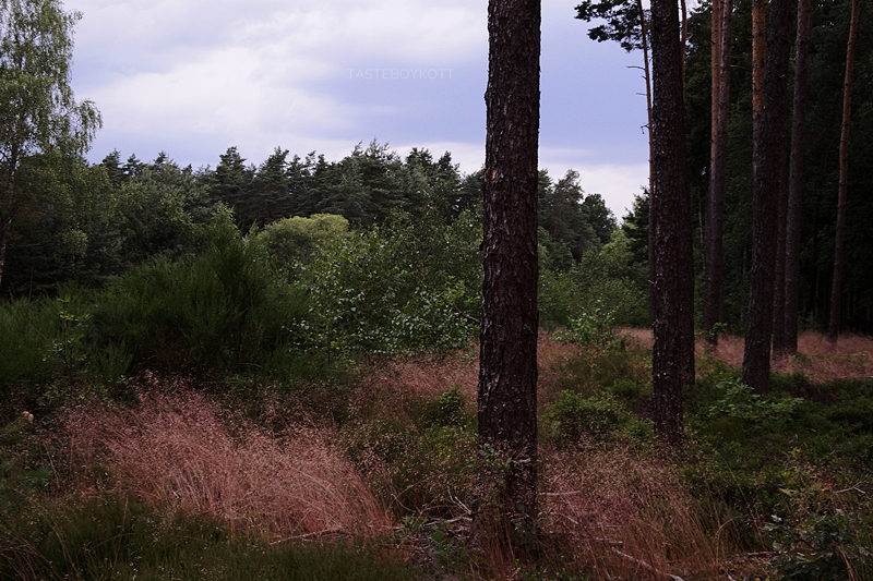 German forest in summer photography dark and moody blueberries and trees on a grey day // Wald im Sommer und Heidelbeeren Fotografie düsteres Licht, Sturm, grauer Tag im Juli