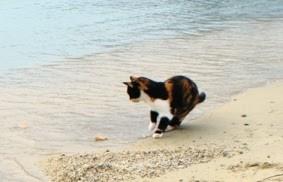 kolorowy grecki kot przygląda się kawałkowi chleba zanurzonemu w morzu