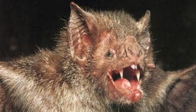 Kelelawar Vampir di Brasil Mulai Melirik Darah Manusia