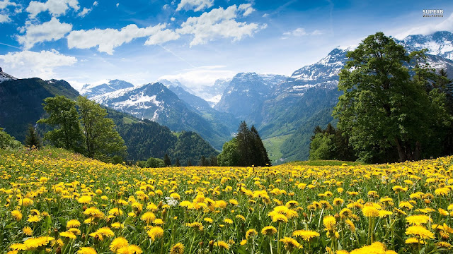 wallpaper-mountain-mountains-nature-flowers-field-yellow-dandelion-sun-wallpapers-backgrounds-picture