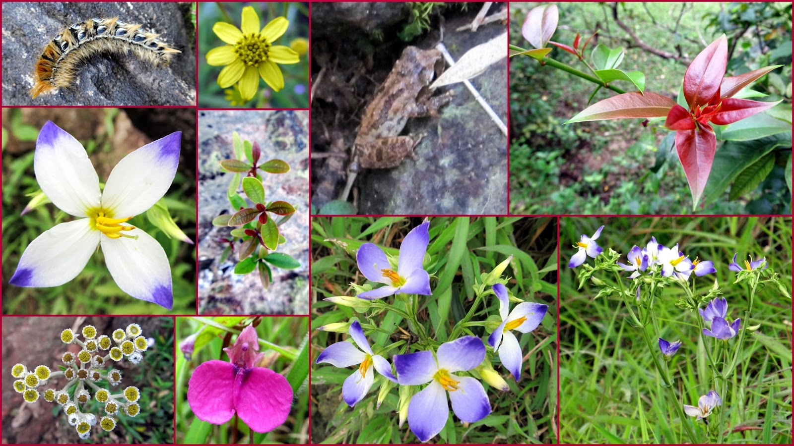 Little Beauties captured during KP trek