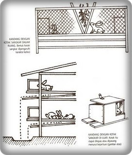 50 Desain Kandang Kelinci Yang Baik Klasik Sederhana Dan Fresh