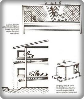 Kandang Kelinci, Cara Membuat dan Contoh Modelnya | Gemar ...