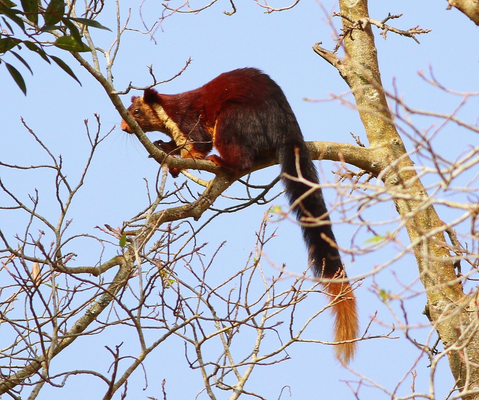 Birding Poole Harbour  Beyond 31 March 14 - Indian -6680