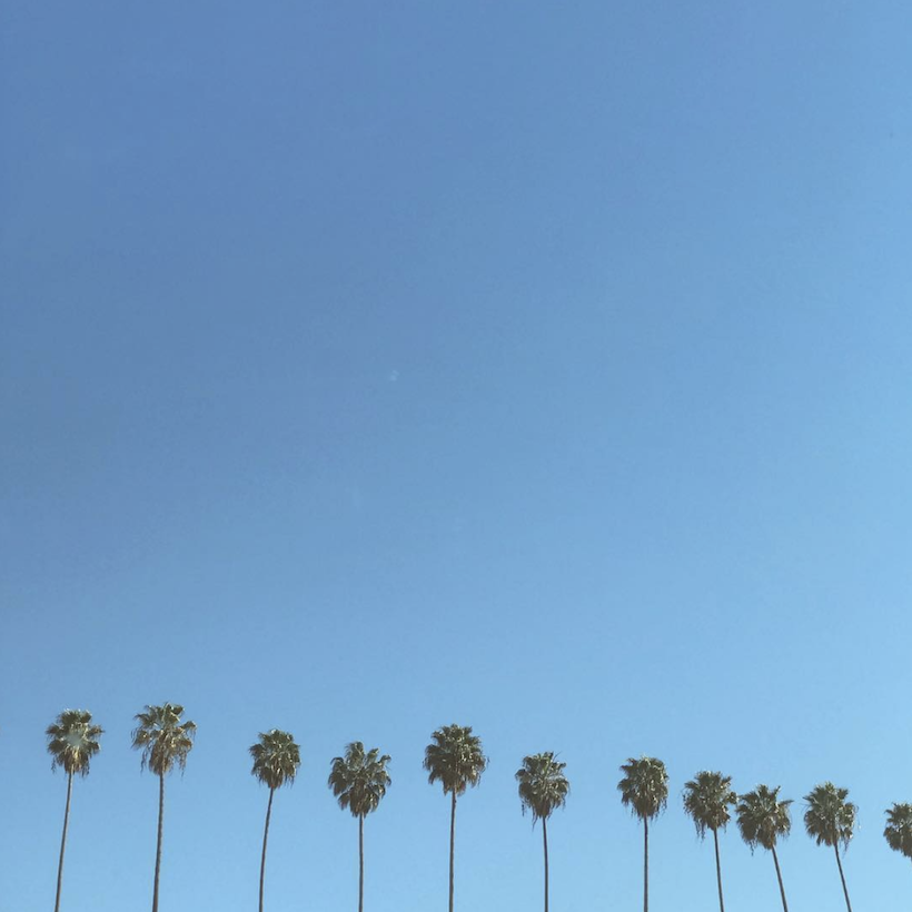 palm trees blue sky los angeles