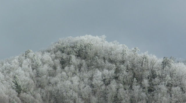 Rime Ice Covers Great Smoky Mountains