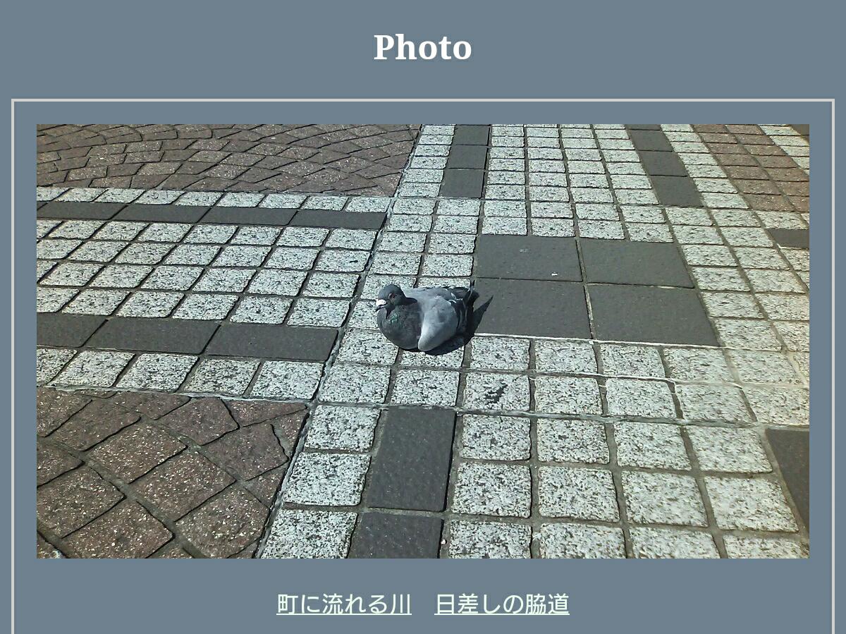 ForevermoreのPhoto/公園に座っている一羽の鳩
