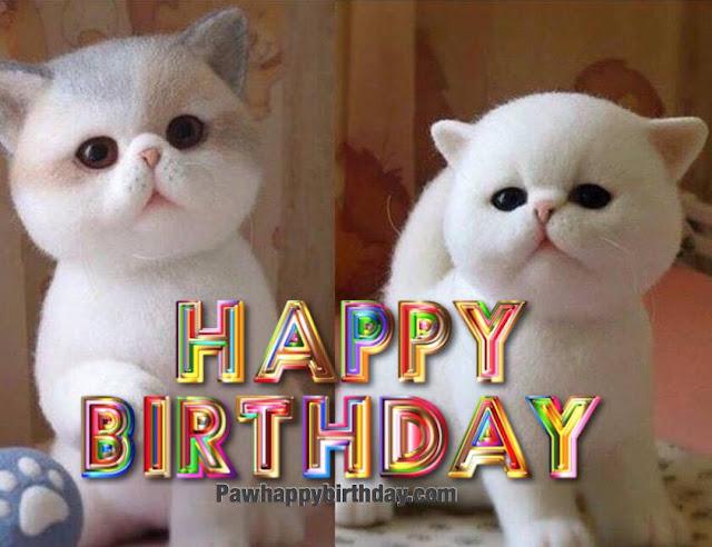 Happy Birthday Cat Postcard Greeting