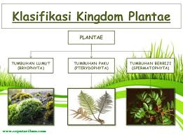 KLASIFIKASI KINGDOM PLANTAE EBOOK