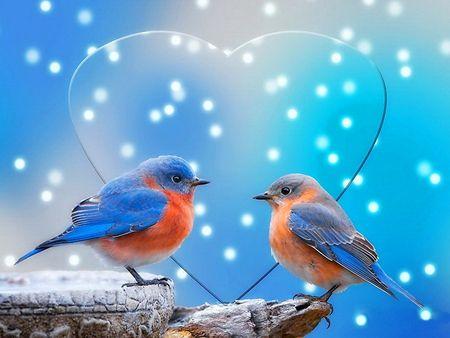 Tải hình ảnh đẹp về tình yêu miễn phí lãng mạn trên facebook