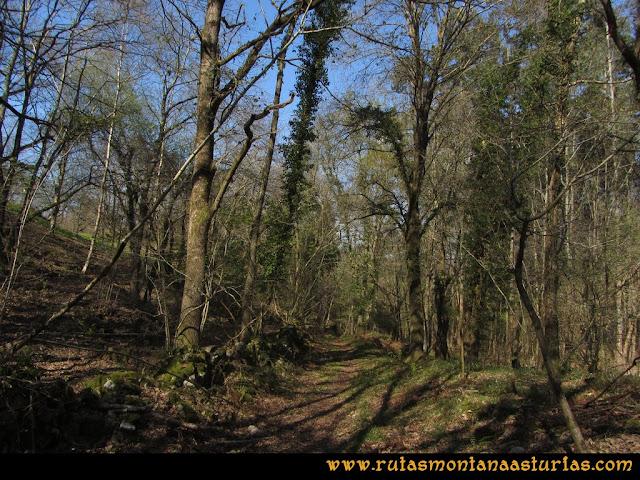 Ruta Ardisana, pico Hibeo: Bosque cerca de Ardisana