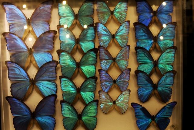Parte de la coleccion del Insectario