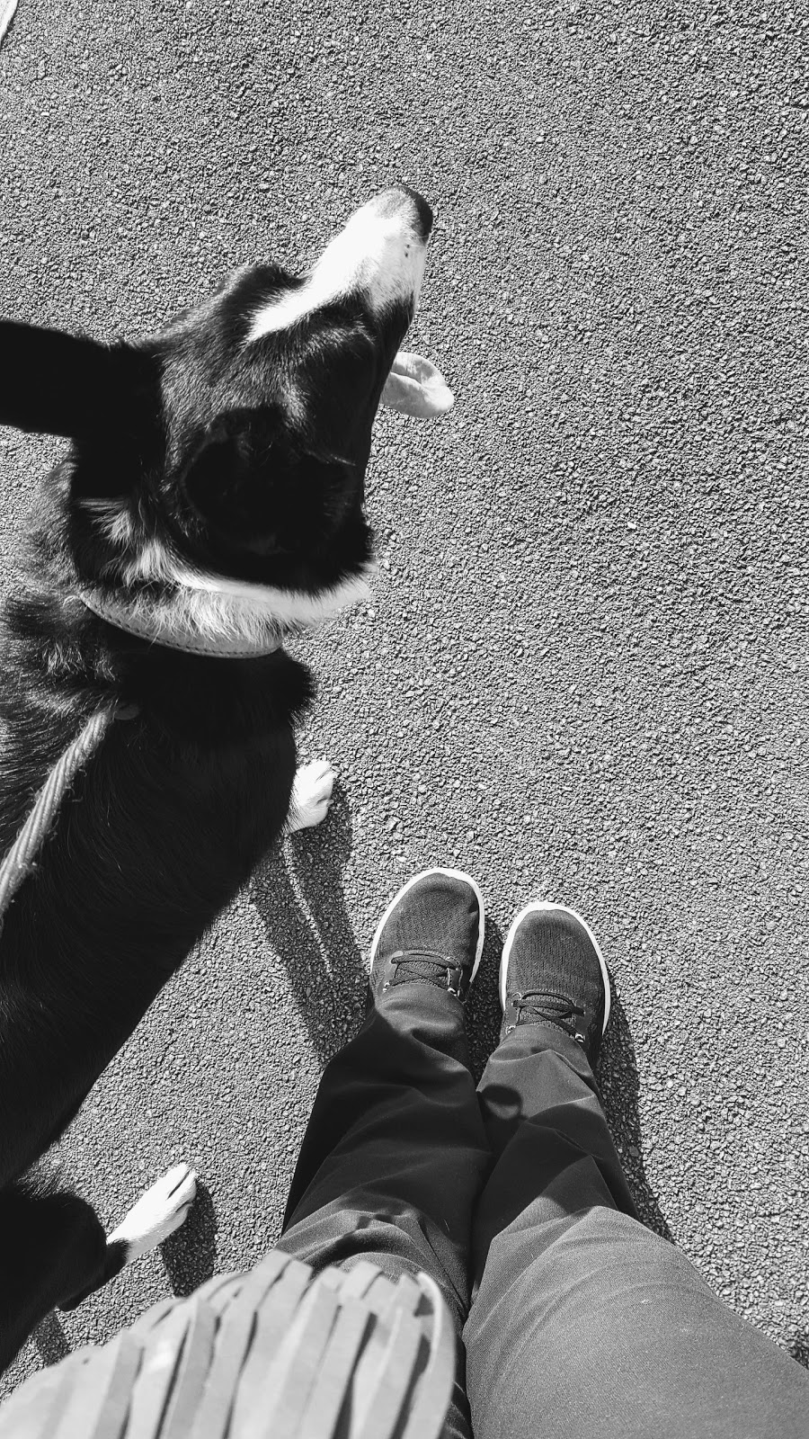 A Walk With Me And Mollie
