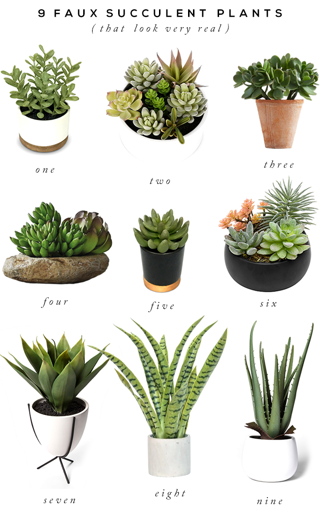 9 Faux Succulents That Look Gloriously Real