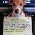 ΒΟΗΘΕΙΑ και για τα ζώα στην Βενεζουέλα...