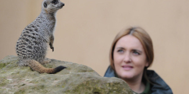 The inside story on London Zoo's love triangle