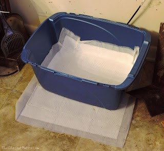 using OUT! Quilted Dog Potty Pads with a cat box