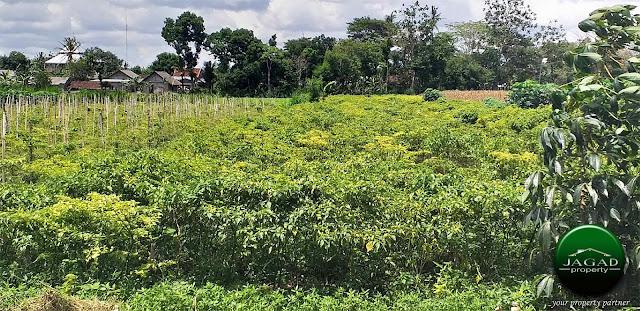 Tanah Tepi jalan dekat SGM jalan Prambanan