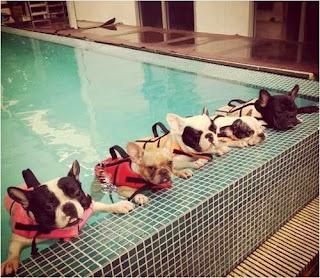 obesidade em cães