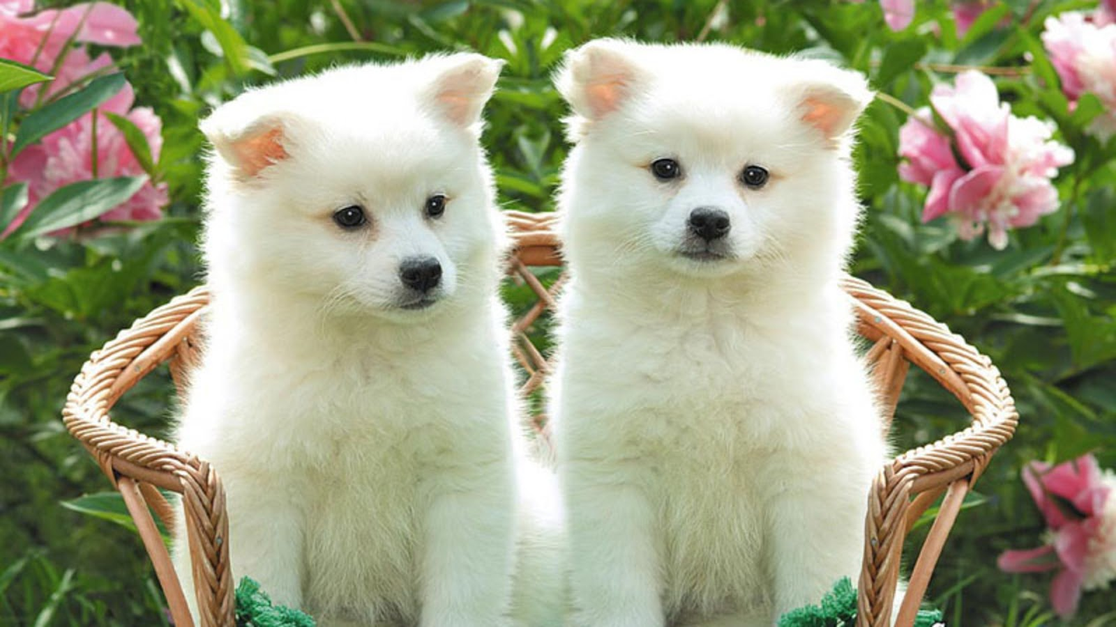 entertainment only: cute dog wallpapers