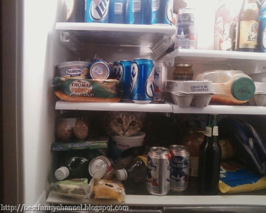 cat in the refrigerator.
