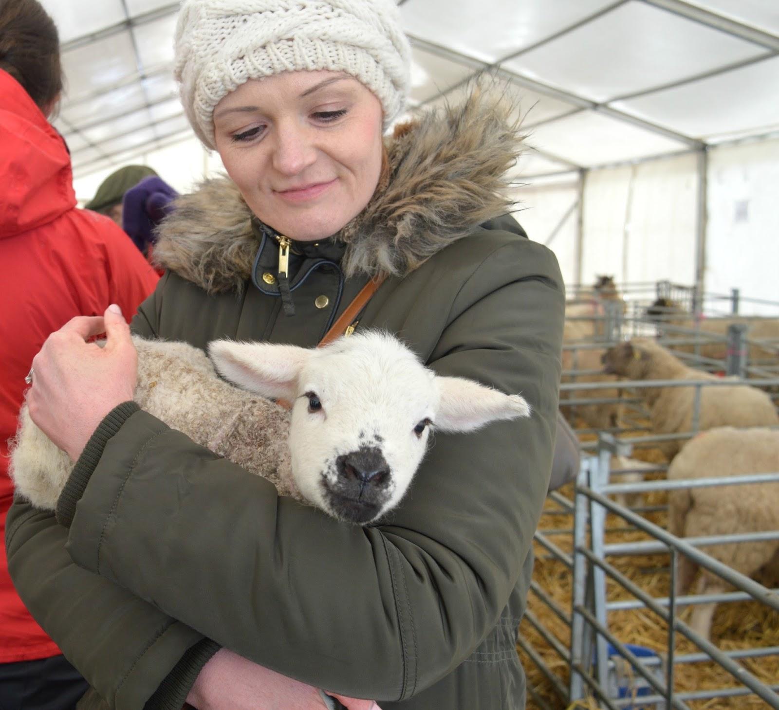 Lambing Live Broomhouse Farm, Northumberland