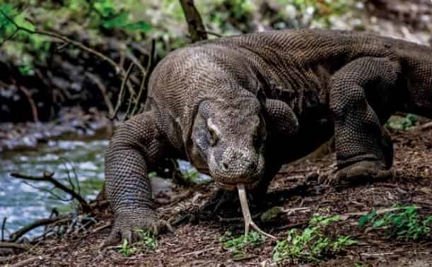 Wisata Alam di Pulau Komodo