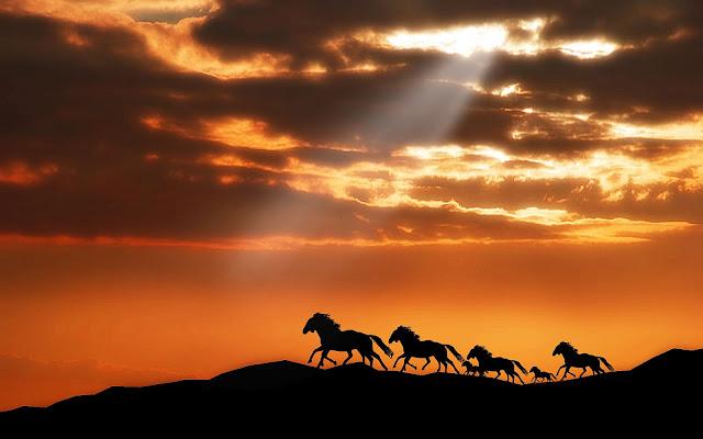 Silhouetten van paarden die rennen over een heuvel bij zonsondergang