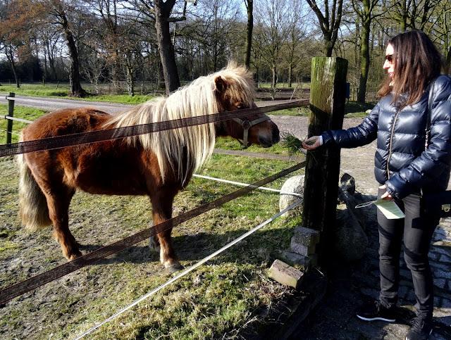 Horses Orvelte