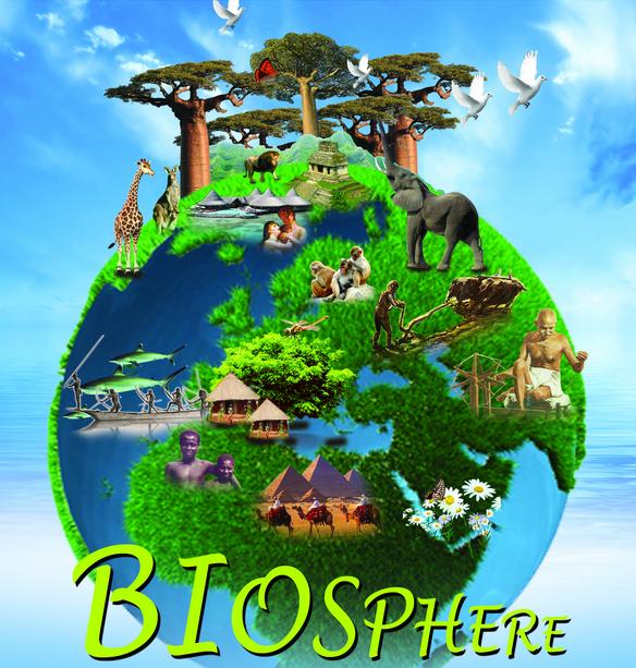 Biosphere on Food Chains Webs