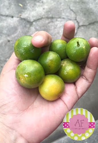 Freshly picked calamansi