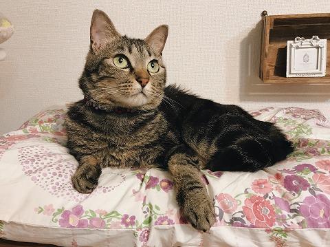 目を見開いて一点を見つめているキジトラ猫