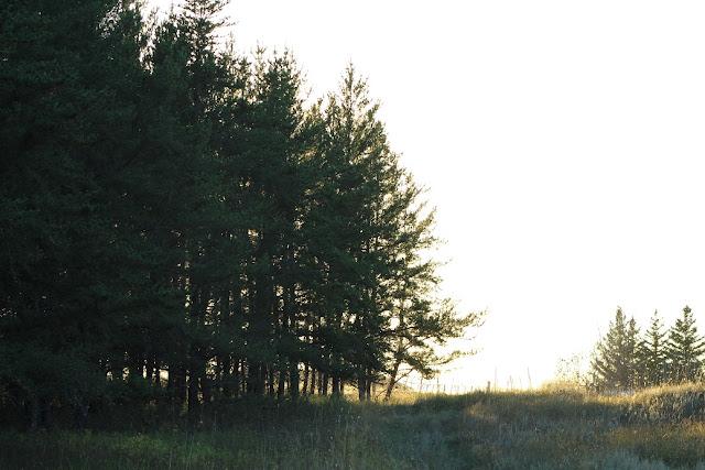 prairie grass by forest