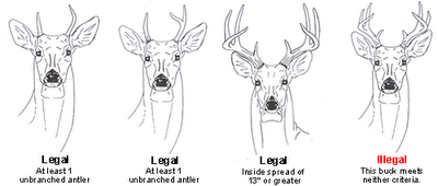 Hunting and Wildlife Management: Deer Hunting Regulations