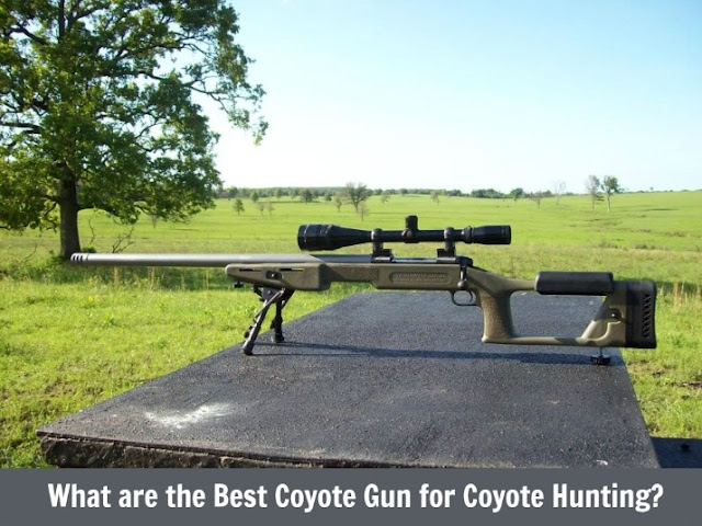 What are the Best Coyote Gun for Hunting?
